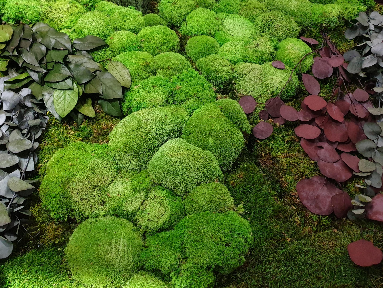 zeleni zidovi